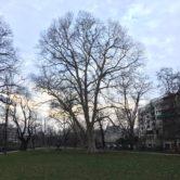 Tag des Baumes 2021